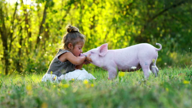 girl caresses and kisses a pig in green world. sustainability and a love of nature, respect for the world and love for animals.