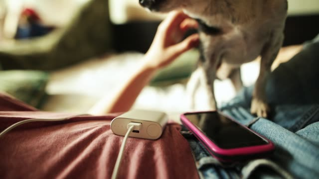 Girl caresses the dog while powerbank charging her smartphone