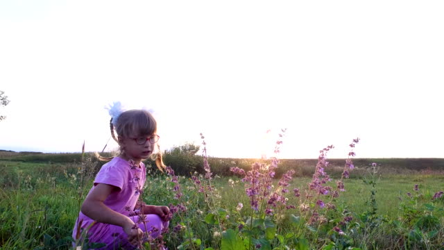 Girl child in glasses collects wild flowers in the meadow. She wants to make a bouquet. video