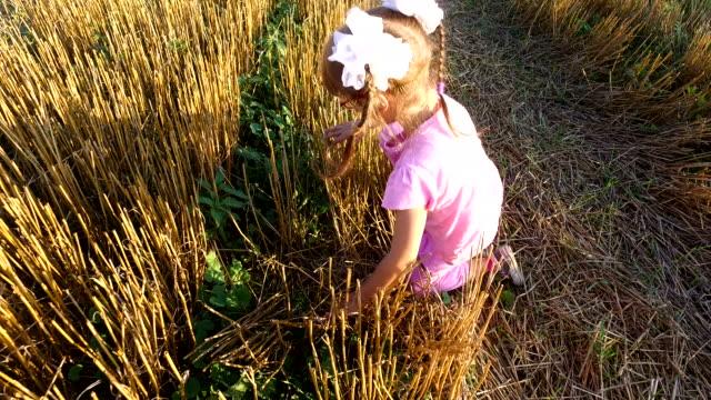 Girl child in sunglasses sneaks by cleaned field. Shorn wheat stalks scratch feet. video