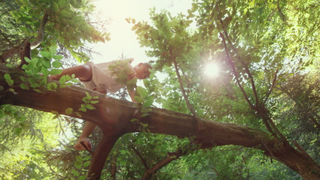 girl climbing up a fallen tree in the forest in sunshine - albero caduto video stock e b–roll