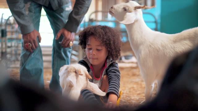 vídeos de stock, filmes e b-roll de afago cabra de criança menina em um celeiro - animais da fazenda