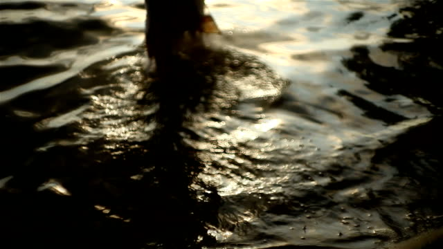 Best Drowning Woman Stock Videos and Royalty-Free Footage - iStock
