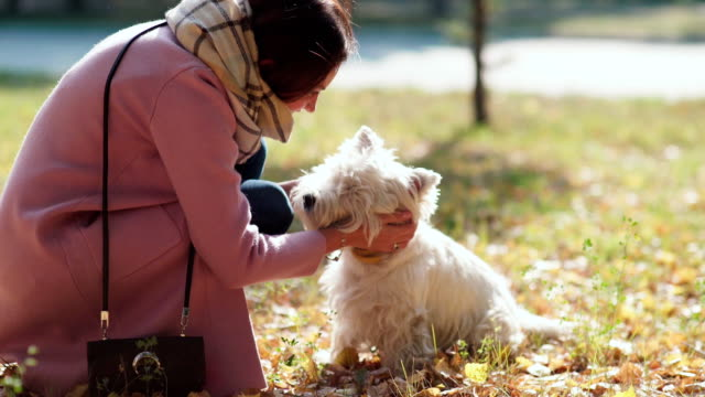 girl enjoys walking the dog. playing with the dog. cheerful puppy - terrier video stock e b–roll