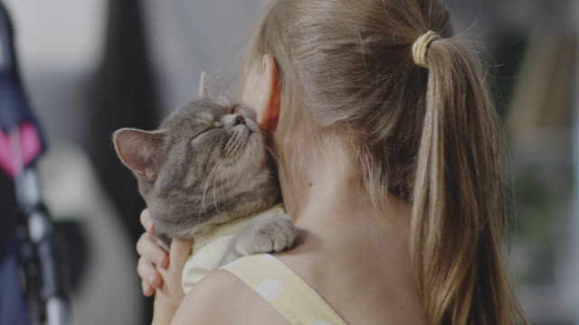 Girl holding and kissing cat Close up shot of girl holding and kissing a cat indulgence stock videos & royalty-free footage