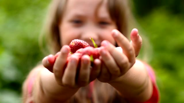 Girl holds out palm forward with strawberries girl holds in hands red strawberries, stretches palm forward with strawberries, lot of vitamins, close-up, natural food, summer crop handful stock videos & royalty-free footage