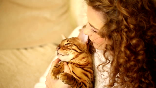 Girl hugging and playing with Bengal cat. Laugh. Young girl playing with a pet. Bengal cat. Girl hugging and playing with the cat. Home comfort. Best friends. She laughs. indulgence stock videos & royalty-free footage
