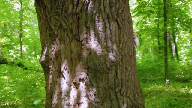 Girl hugs the big tree in the forest, love for nature. Steadicam shot, camera flying around the tree video