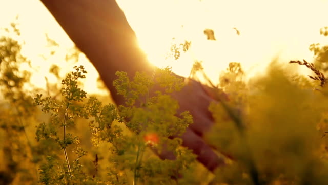 Girl in a flower field at sunset video