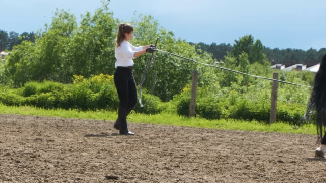 A girl in a white shirt and black pants and a black horse in summer training in sunny weather