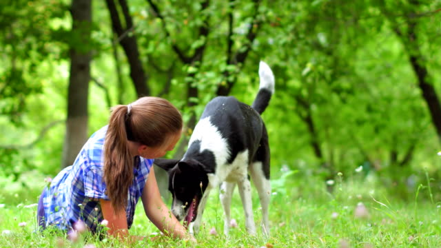 girl in blue shirt laying on a grass and petting a dog - fedeltà video stock e b–roll