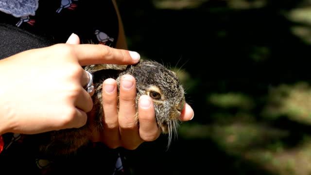kız küçük bir vahşi tüylü bebeği tavşan tutuyor. i̇çinde belgili tanımlık palmiye küçük tavşan - tavşan hayvan stok videoları ve detay görüntü çekimi