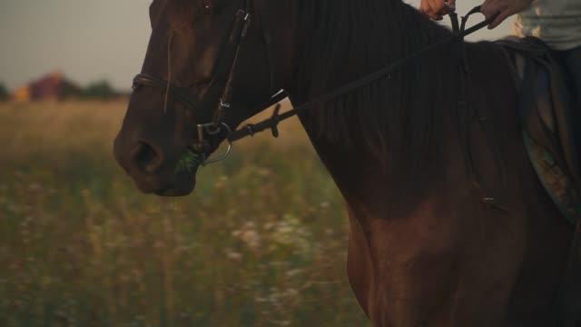 女の子が馬に乗ってください。 - 動物に乗る点の映像素材/bロール