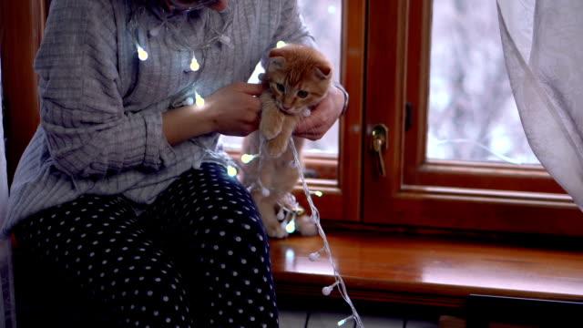 girl, kitten and christmas - davanzale video stock e b–roll