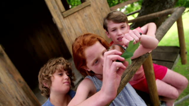 Girl looking at a leaf with magnifying glass with friends Redhead girl with two boys who are her friends looking at a green oak leaf with a large round magnifying glass in a treehouse redhead stock videos & royalty-free footage
