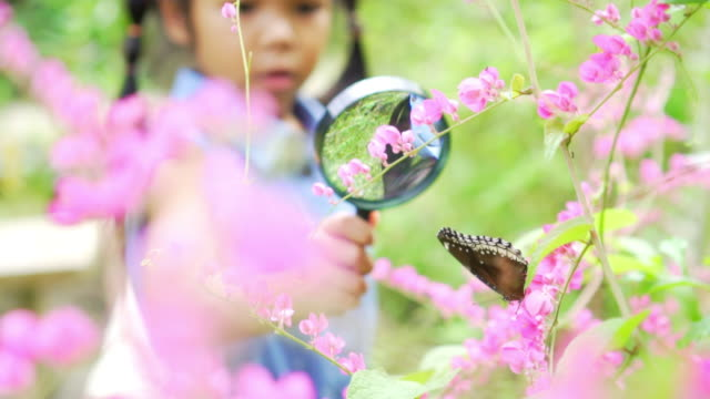 A girl looks at butterfly on branch through magnifying glass Asian little girl researcher looks at brown butterfly on branch through magnifying glass, slow motion butterfly insect stock videos & royalty-free footage