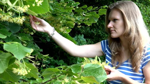 stockvideo's en b-roll-footage met meisje kies linden boom bloemen aan houten rieten dish - camelia white