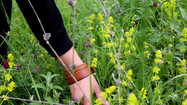 vídeos de stock e filmes b-roll de menina escolher flores silvestres em campo - granadilha