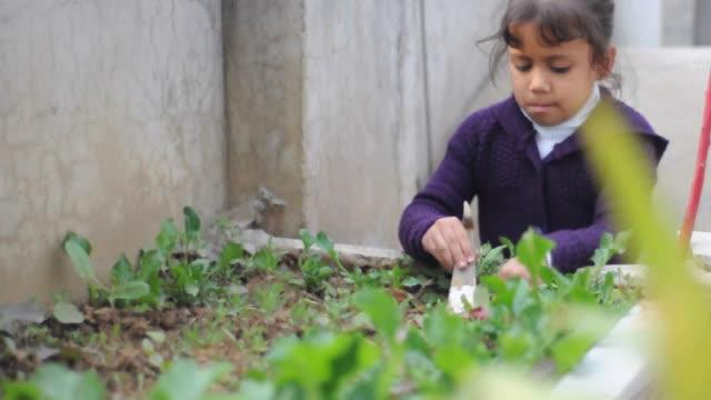 Girl planting vegetables in a garden video