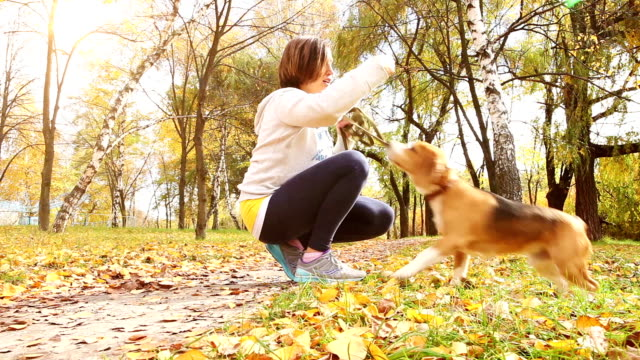 Girl playing with beagle puppy dog in autumnal park video