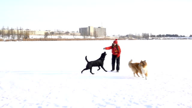 girl playing with dogs on winter snow field