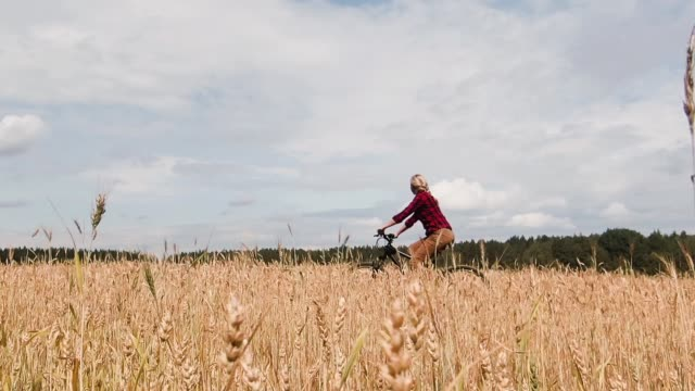 Girl rides a bicycle a field of wheat.