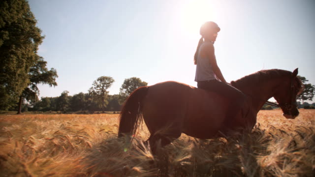 Girl riding a healthy brown horse in a field