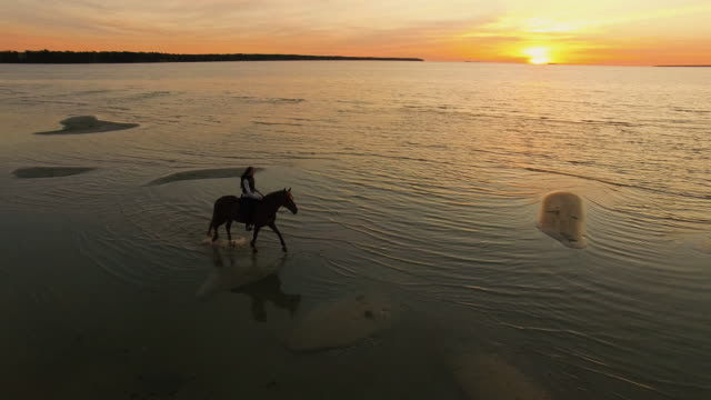 GIrl Riding Horse on a Beach. Horse Walks on Water. Beatiful Sunset is Seen in this Aerial Shot. video