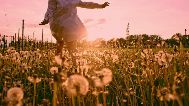 SLO MO LA TS Girl running with arms outstretched through dandelions at sunset Slow motion low angle tracking shot of a young girl running with arms outstretched through the meadow full of dandelions at sunset. Slovenia grass area stock videos & royalty-free footage