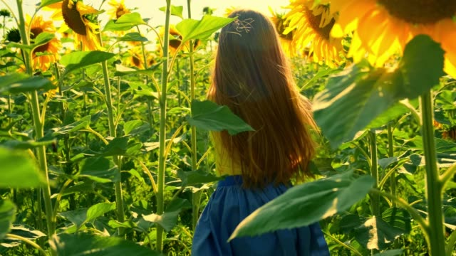 Girl runs on a field of sunflowers at sunset
