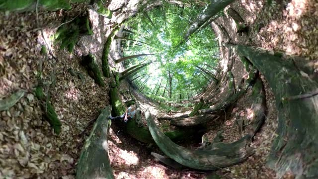 Girl sits on old tree trunks, forest wellness, forest medicine, Little planet effect