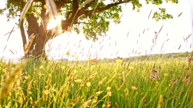SLO MO Girl swinging on a tree swing in meadow video