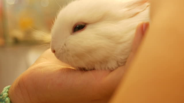 girl take care little bunny video