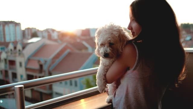 girl take care of little dog - bichon frisé video stock e b–roll