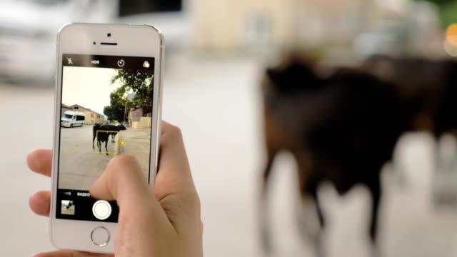 Girl takes pictures of cow on the city street - Mestia, Georgia video
