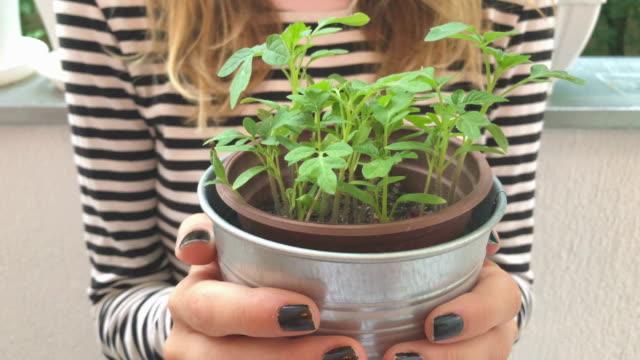 flickan tar hand om hemodlade växter kryddor. - basilika ört bildbanksvideor och videomaterial från bakom kulisserna