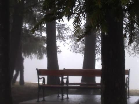 ragazza cammina attraverso il bosco nebbioso - pinacee video stock e b–roll