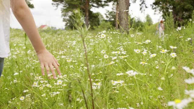 vídeos y material grabado en eventos de stock de chica caminando tocando hierba verde y manzanilla - manzanilla