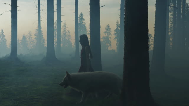 girl walking with a dog in the evening - lupo video stock e b–roll