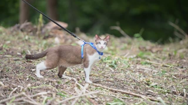 전염병을 위해 정원 검역 시간 에서 산책을 위해 고양이를 입고 마스크를 쓴 소녀 - 풀 벼과 스톡 비디오 및 b-롤 화면