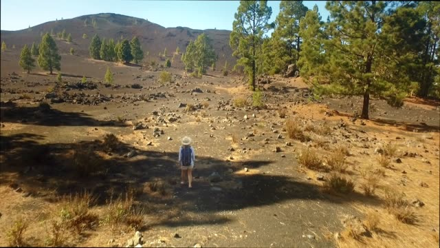 girl with a backpack on the path on the way to the crater of the volcano On the black lava of the volcano grow mighty pines girl with a backpack on the path on the way to the crater of the volcano. pine nut stock videos & royalty-free footage