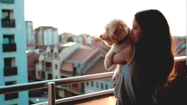 girl with a small dog enjoying a beautiful sunset over city - balcone video stock e b–roll