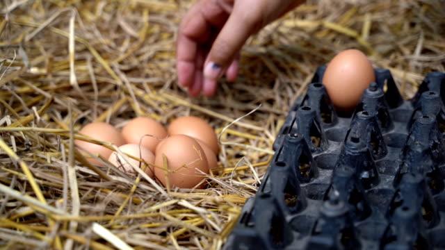 mädchens hand pflücken eier aus stroh nest. leben auf dem lande - nest stock-videos und b-roll-filmmaterial