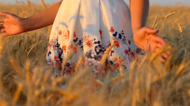 girl's hands close-up, touch the ears of wheat, illuminated by sunlight - giuntura umana video stock e b–roll