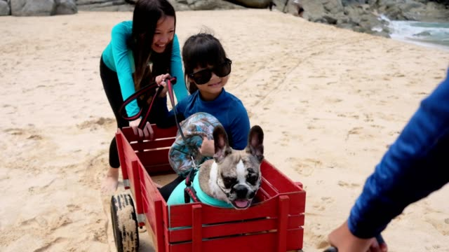 girls help to pull trolley for her sisther with dog to run on the beach