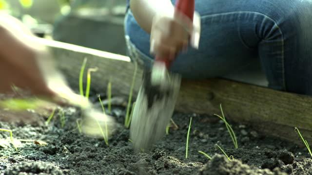 mädchen mit schaufel, plant gemüse - urban gardening stock-videos und b-roll-filmmaterial