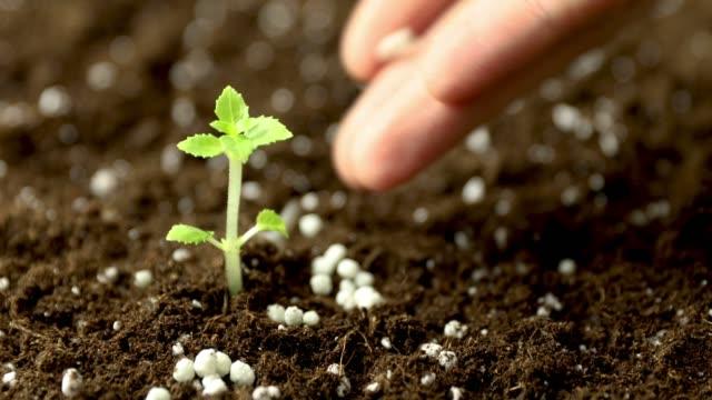 giving fertilizer to new seedling growing in soil - fertilizzante video stock e b–roll