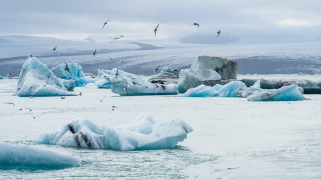 Glacial lake with icebergs, birds overflying Glacial lake in Iceland at Jokulsarlon glacier lagoon with icebergs with Vatnajokull ice cap in the background and birds overflying. Shot in 4K resolution icecap stock videos & royalty-free footage