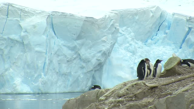 ghiacciaio rottura dei ghiacci con pinguini in primo piano - climate change video stock e b–roll
