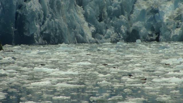 Glacier In Alaska Close Up Glacier In Alaska Close Up sorpresa stock videos & royalty-free footage